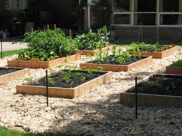 Raised Beds for Veggies