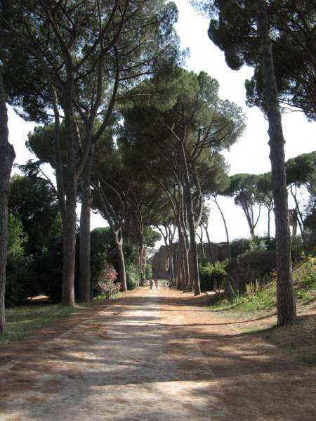 Row of Stone Pines on Palatine Hill