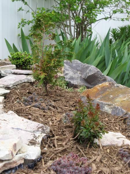 3 Dwarf Plants