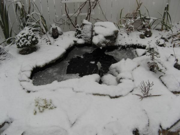 Water Garden in Winter