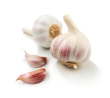how to grow garlic in quebec