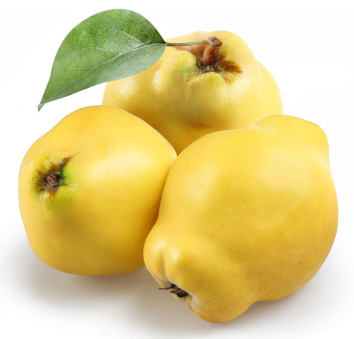How To Grow Quinces