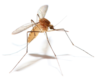 how to keep mosquitoes out of your yard and garden backyard