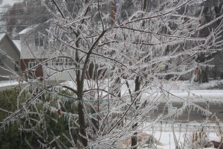 Ice on an Apple Tree