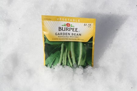 How to plant seeds in early March in Michigan.