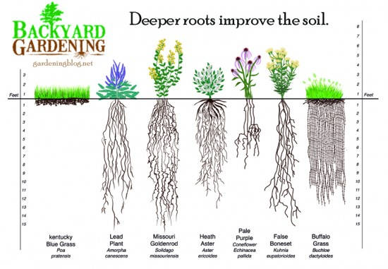 Depth Of Root Is Also Often To Height Top Growth With Turf Gres Anyways So If You Want Deep Roots Let Your Lawn Get Longer